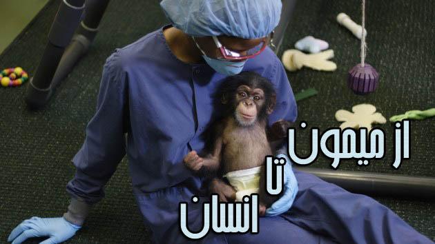 مستند از میمون تا انسان